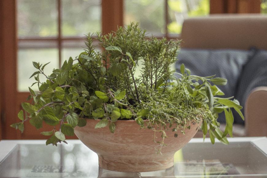 Jak sadzić zioła? Kompozycja ziół