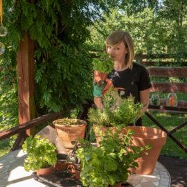 Mój ogródek warzywny Ula Pedantula